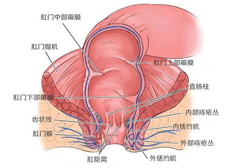 肛门癌和肛门鳞状细胞癌是什么原因引起的?