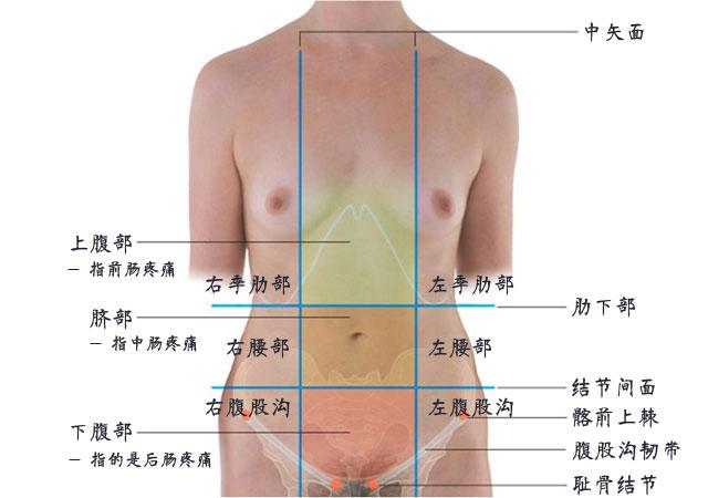 腹部九分法怎么分及各个分区器官解剖图片